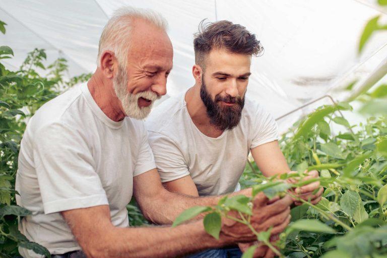 Far og sønn i drivhus